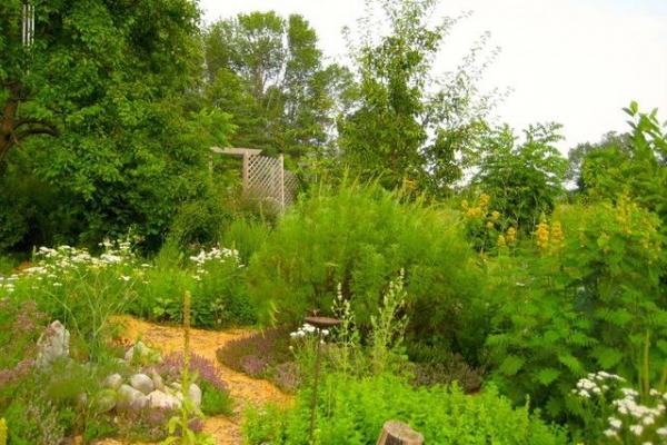 garden-pics-038D92E5D30-C842-CCC7-1021-D9409070DAC2.jpg