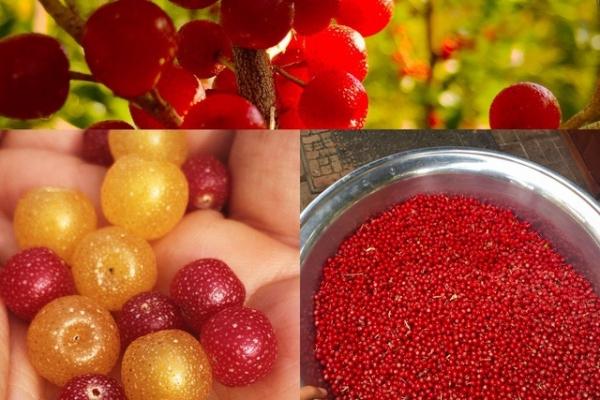 incredible-edibles864877BA-D0E1-B3B9-C355-FD424B0EE556.jpg